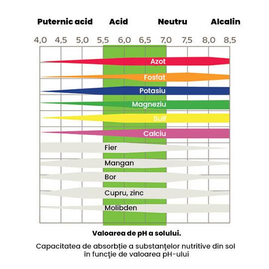 Absortia substantelor nutritive