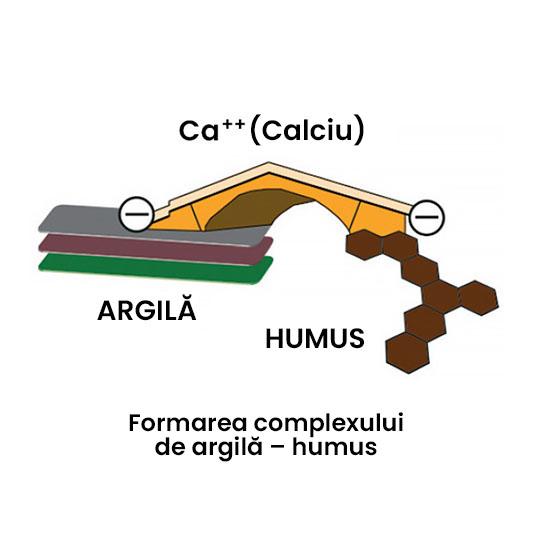 Complex argila-humus